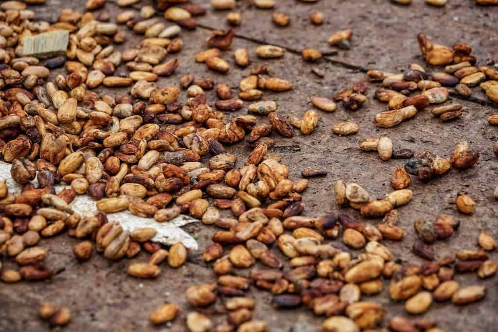 Girls Who Travel   A pile of cocoa beans and shells