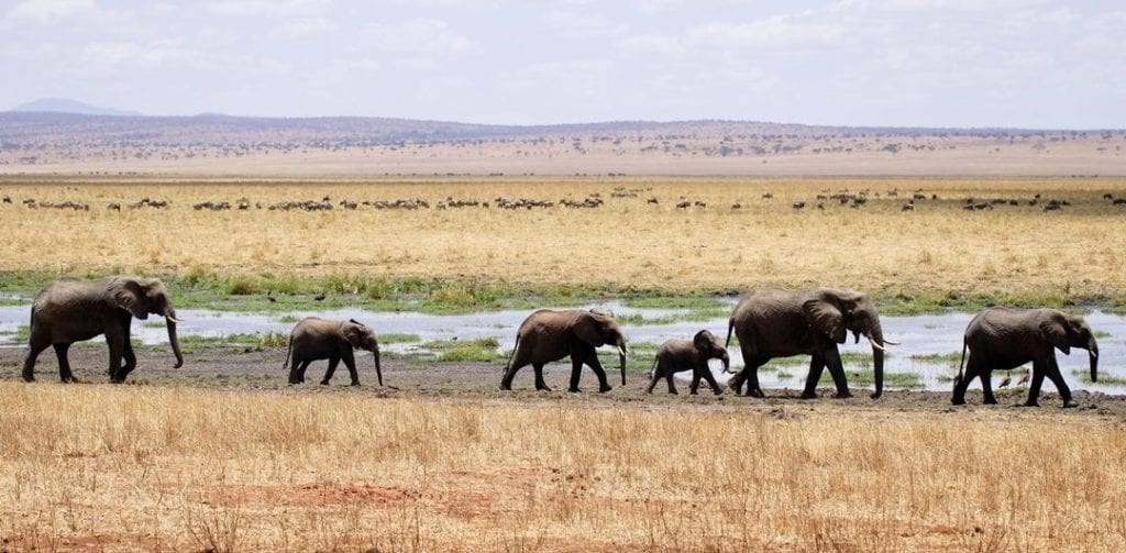 Girls Who Travel | Are Interactions with Elephants Truly Ethical?