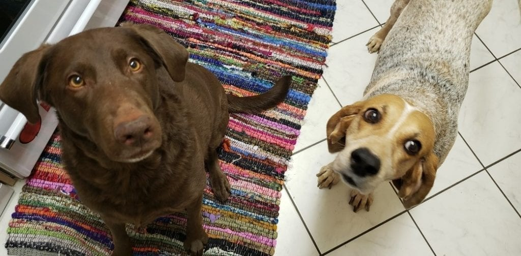 Girls Who Travel | Homemade Pup Treats your Dog will Love!