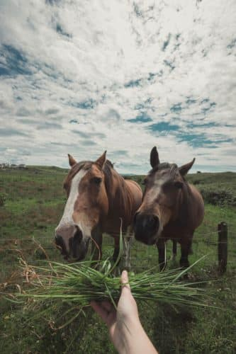 Her Adventures | Horses eating grass
