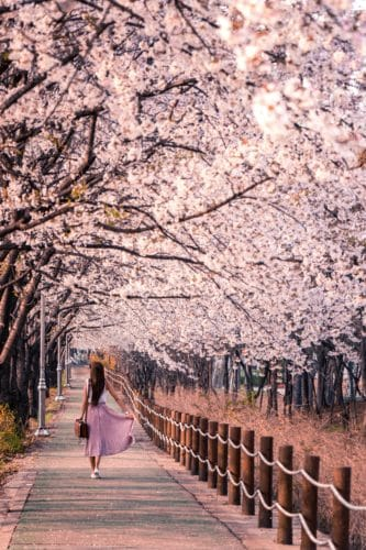 Her Adventures | Girl cherry blossoms
