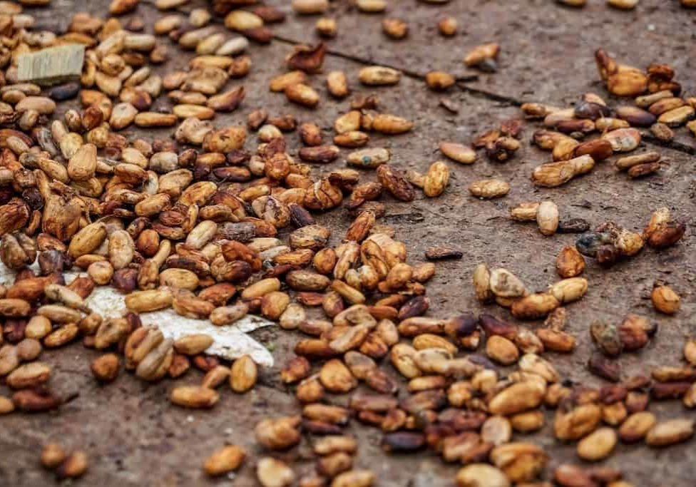 Girls Who Travel | A pile of cocoa beans and shells